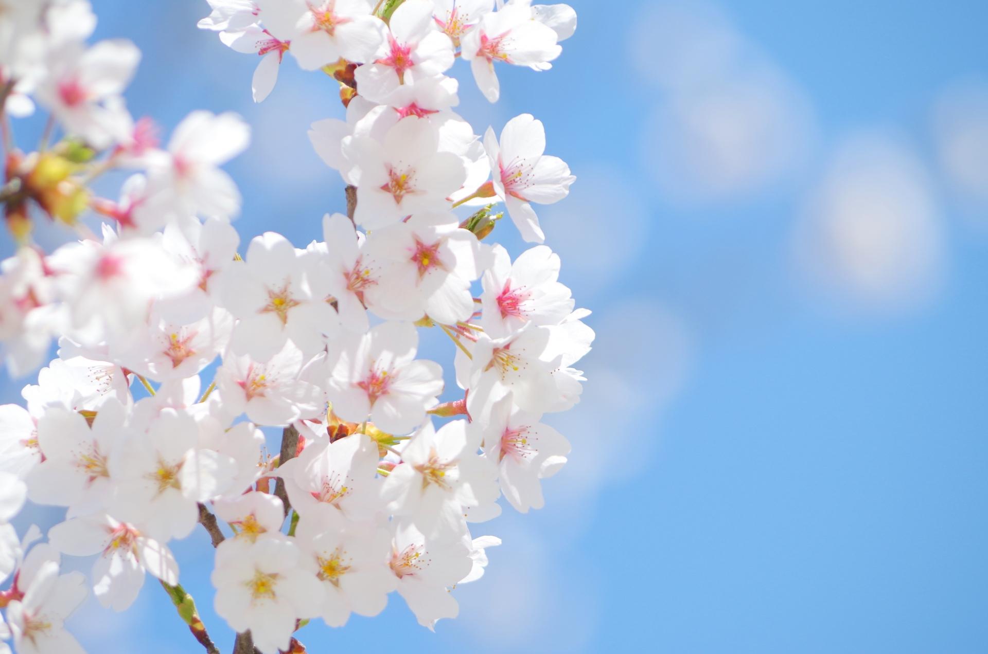「建国記念の日」日本っていつできたの?